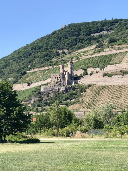 Blick auf die hessische  Rheinseite (Burgruine Ehrenfels)