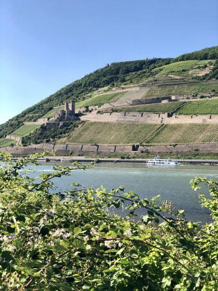 Rhein Blick